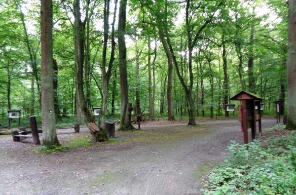 Das Waldklassenzimmer